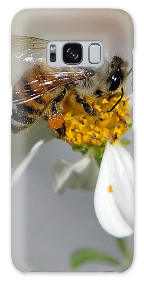 Bee Galaxy S8 Case featuring the photograph Collections by Keith Lovejoy