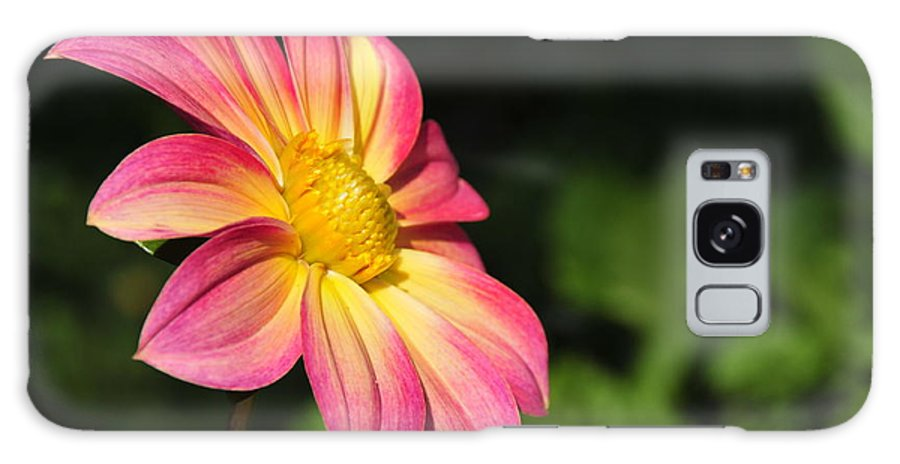 Flower Galaxy S8 Case featuring the photograph Color Explosion by David Arment