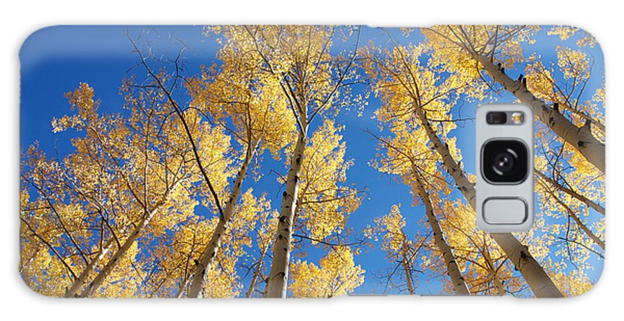 Aspen Galaxy S8 Case featuring the photograph Colorado Aspen by Jerry McElroy