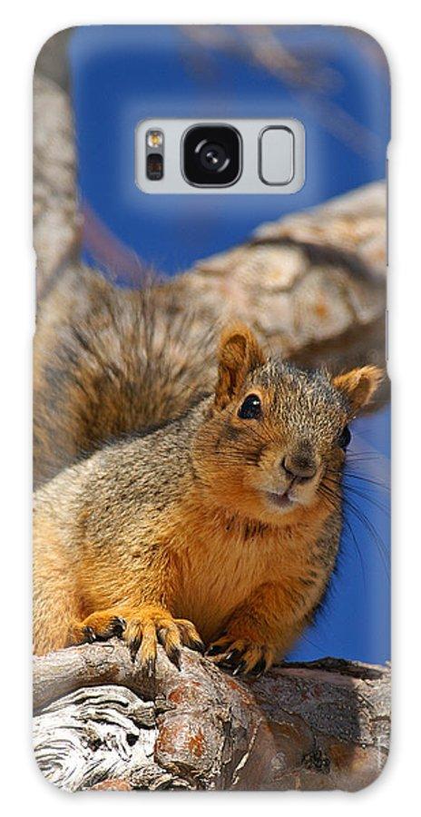 Colorado Galaxy S8 Case featuring the photograph Colorado Squirrel Standoff by Jack Norton