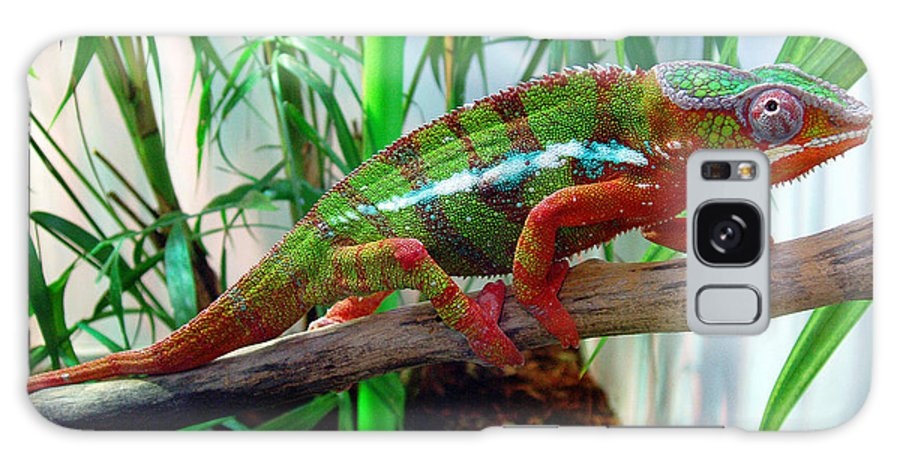 Chameleon Galaxy Case featuring the photograph Colorful Chameleon by Nancy Mueller