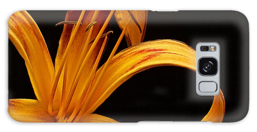 Lily Galaxy S8 Case featuring the photograph Colorful Curls by Judy Vincent