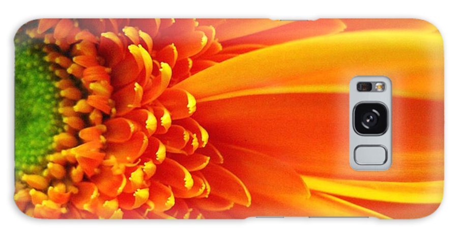 Red Galaxy Case featuring the photograph Colors Galore by Rhonda Barrett