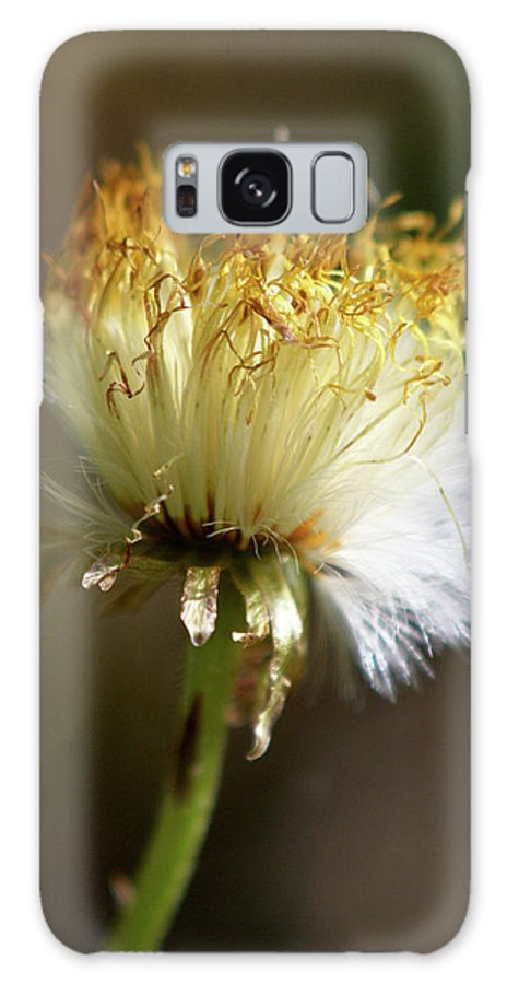 Lehtokukka Galaxy S8 Case featuring the photograph Coltsfoot Bad Hair Day 1 by Jouko Lehto