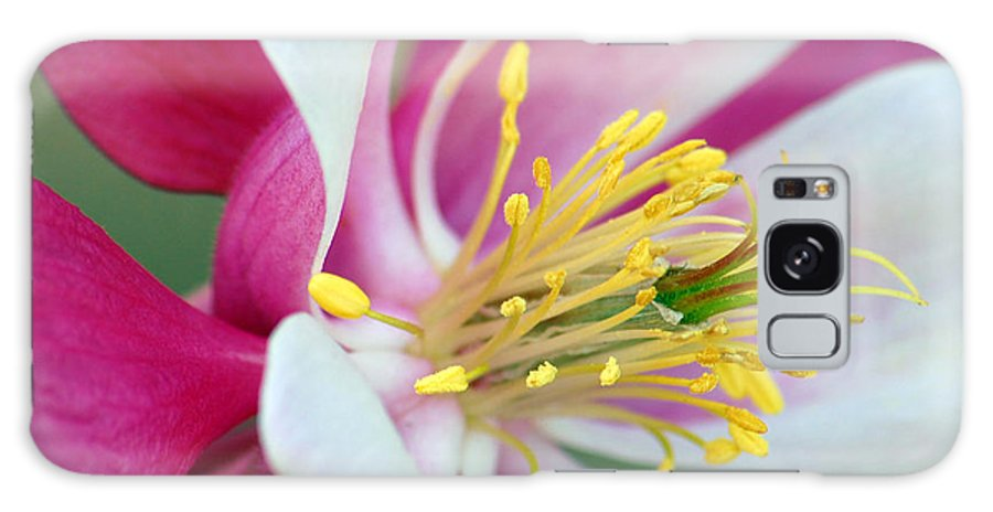 Columbine Galaxy Case featuring the photograph Columbine Flower 2 by Amy Fose