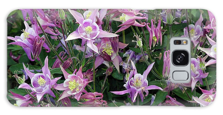 Spring Galaxy S8 Case featuring the photograph Columbine Splendor by Lynda Lehmann