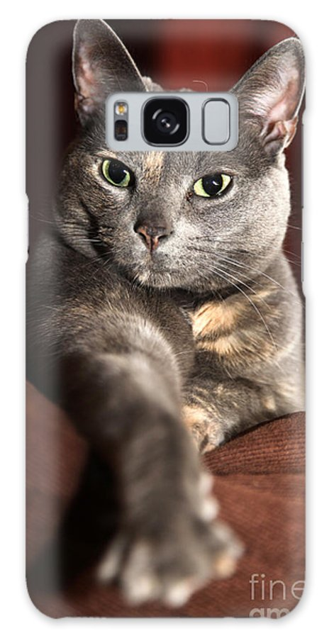 Kitty Galaxy S8 Case featuring the photograph Come Here by Amanda Barcon