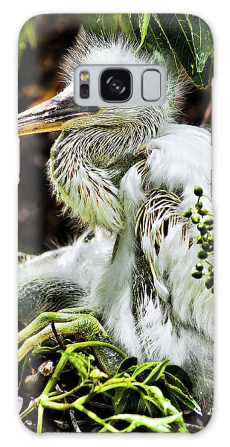 Egret Galaxy S8 Case featuring the photograph Come On Feathers by Christopher Holmes