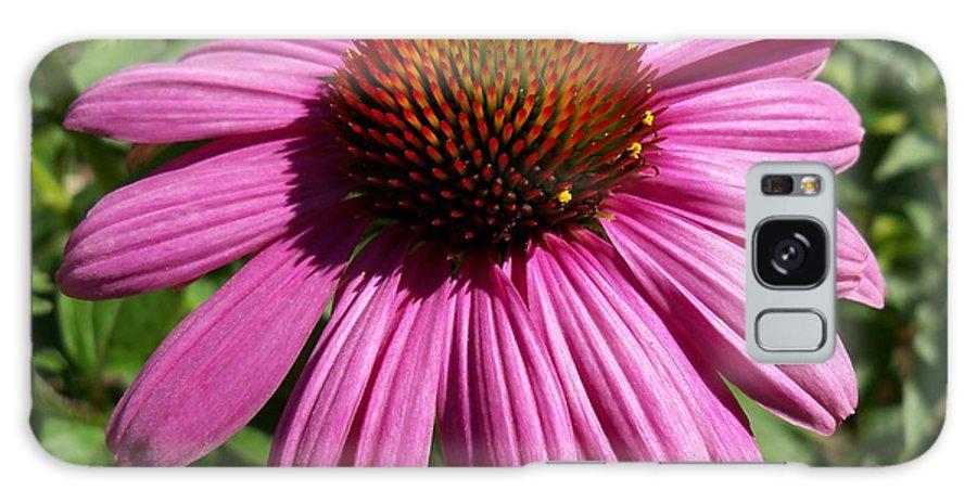 Flower Galaxy S8 Case featuring the photograph Cone Flower by Corinne Elizabeth Cowherd