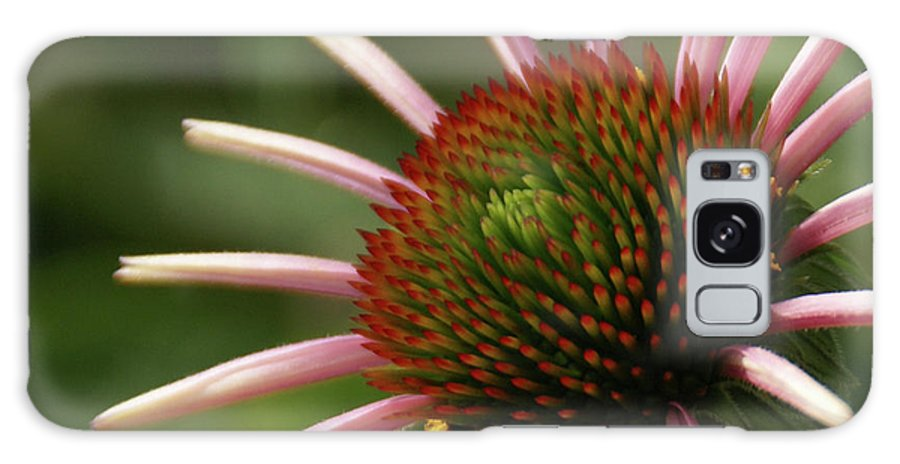 Coneflower Galaxy S8 Case featuring the photograph Coneflower by Linda Shafer