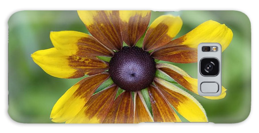 New England Galaxy S8 Case featuring the photograph Coneflower - New England Wild Flower by Erin Paul Donovan