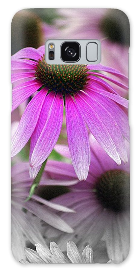 Flowers Galaxy S8 Case featuring the photograph Coneflowers by Marty Koch