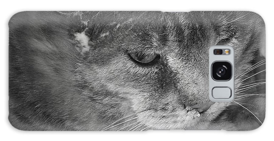 Cat Galaxy S8 Case featuring the photograph Contemplation Of Thumbody In Black And White by Deborah Montana