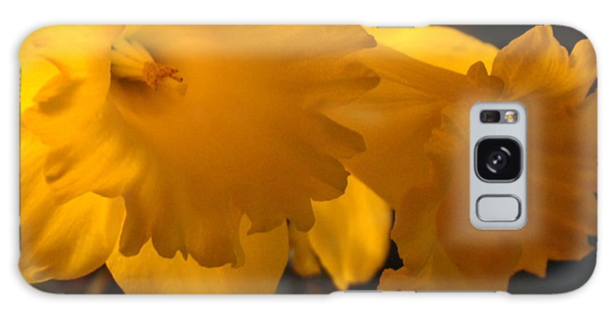 �daffodils Artwork� Galaxy Case featuring the photograph Contemporary Flower Artwork 10 Daffodil Flowers Evening Glow by Baslee Troutman