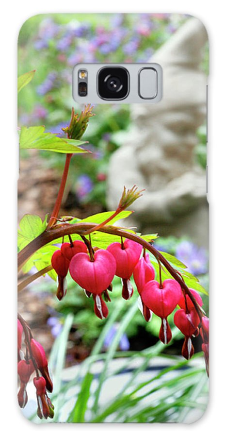 Sweet Galaxy S8 Case featuring the photograph Content Gnome With Bleeding Hearts by Marilyn Hunt