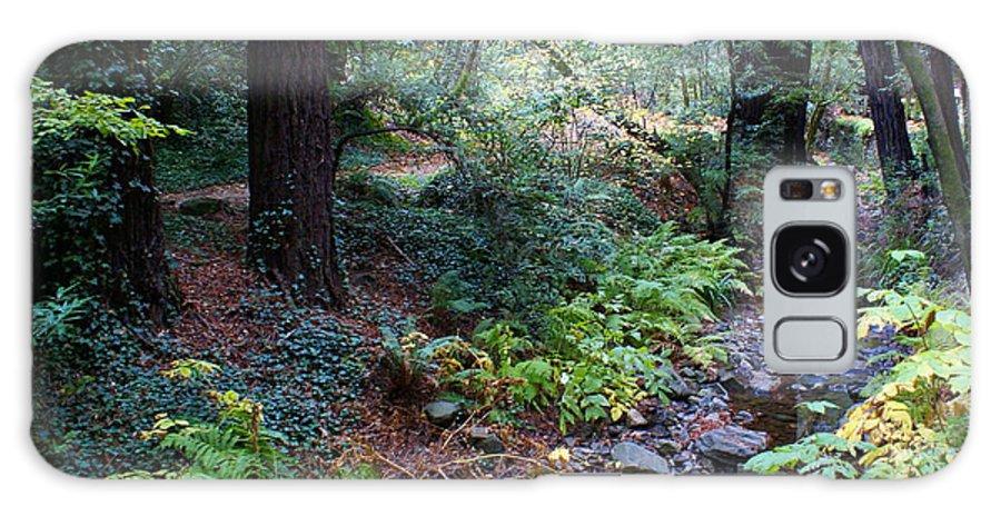 Mount Tamalpais Galaxy S8 Case featuring the photograph Cool Creek On Mt Tamalpais by Ben Upham III