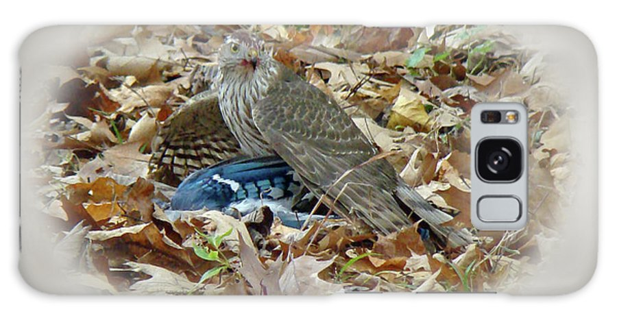 Hawk Galaxy S8 Case featuring the photograph Cooper's Hawk - Accipiter Cooperii - With Blue Jay by Mother Nature
