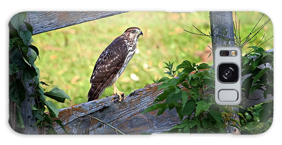 Hawk Galaxy S8 Case featuring the photograph Coopers Hawk Perched On A Weathered Fence by Al Mueller