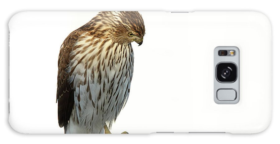 Hawks Galaxy S8 Case featuring the digital art Coopers Hawk by William Bader