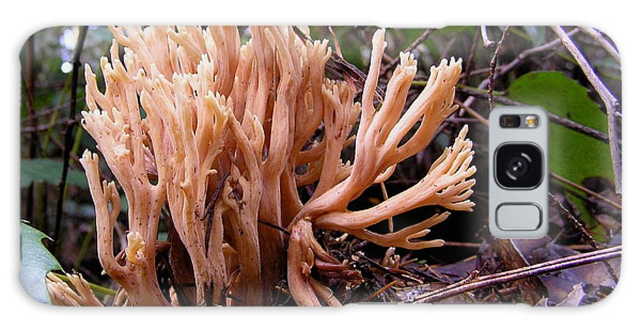 Coral Galaxy S8 Case featuring the photograph Coral Mushroom by Suzanne Shepherd
