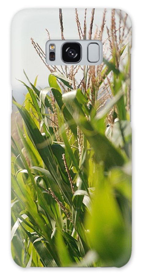 Corn Galaxy Case featuring the photograph Corn Country by Margaret Fortunato