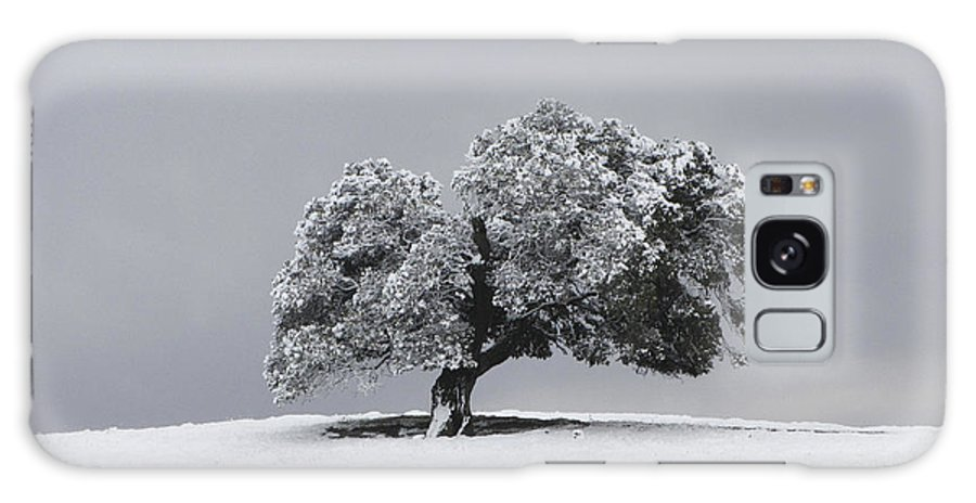 Tree Galaxy S8 Case featuring the photograph Corral Hollow Tree In Snow by Karen W Meyer