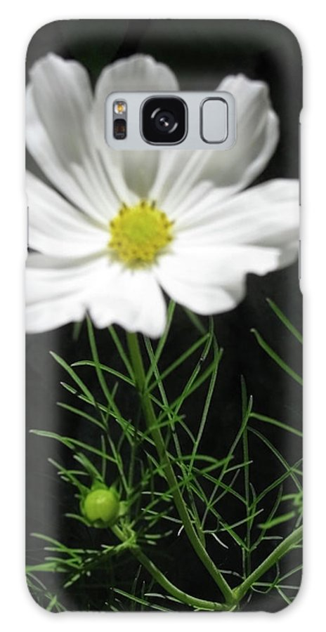 Cosmos Flowers Galaxy S8 Case featuring the photograph Cosmos Flower by Debra   Vatalaro
