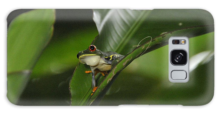 Costa Rica Galaxy S8 Case featuring the photograph Costa Rica Red Eye Frog I by Jody Lovejoy