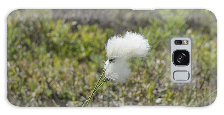 New England Galaxy S8 Case featuring the photograph Cotton Grass -eriophorum Virginicum- by Erin Paul Donovan