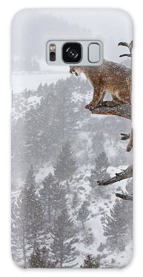 Cougar Galaxy S8 Case featuring the photograph Cougar Calling In Tree by Jenny Hibbert