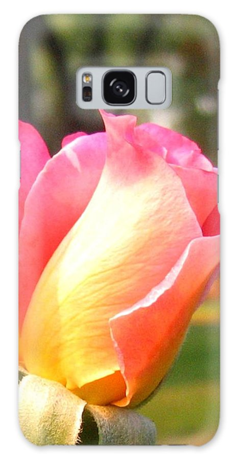 Rose Galaxy S8 Case featuring the photograph Country Rose by Will Borden