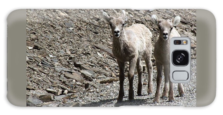 Baby Galaxy S8 Case featuring the photograph Couple Of Cuties- Baby Bighorn by Tiffany Vest