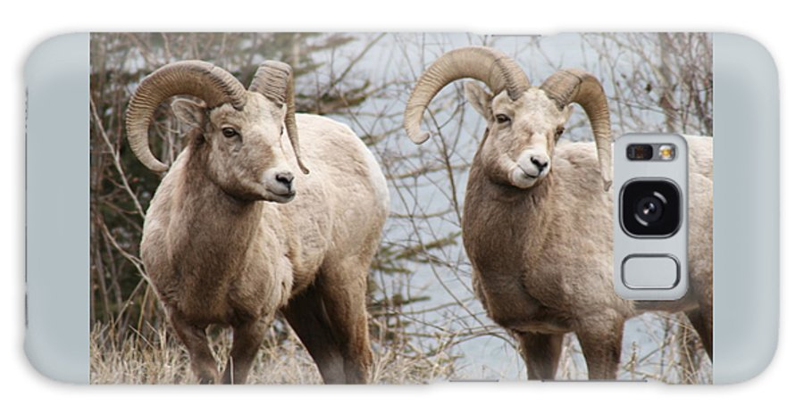 Bighorn Sheep Galaxy S8 Case featuring the photograph Couple Of Rams- Banff National Park by Tiffany Vest