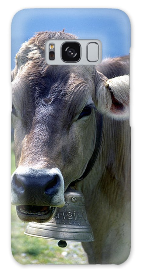 Cow Galaxy S8 Case featuring the photograph Cow by Flavia Westerwelle