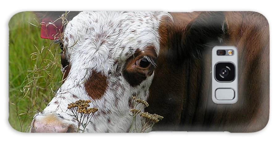 Tongue Galaxy Case featuring the photograph Cow Tongue by Louise Magno