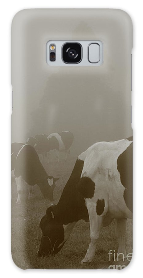 Animals Galaxy S8 Case featuring the photograph Cows In The Mist by Gaspar Avila