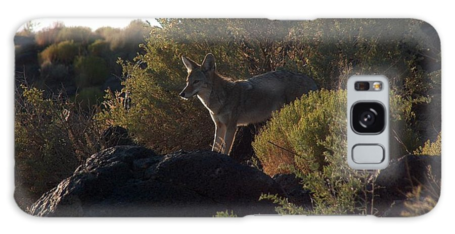 Coyote Galaxy S8 Case featuring the photograph Coyote At The Petrogyphs 2 by Tim McCarthy