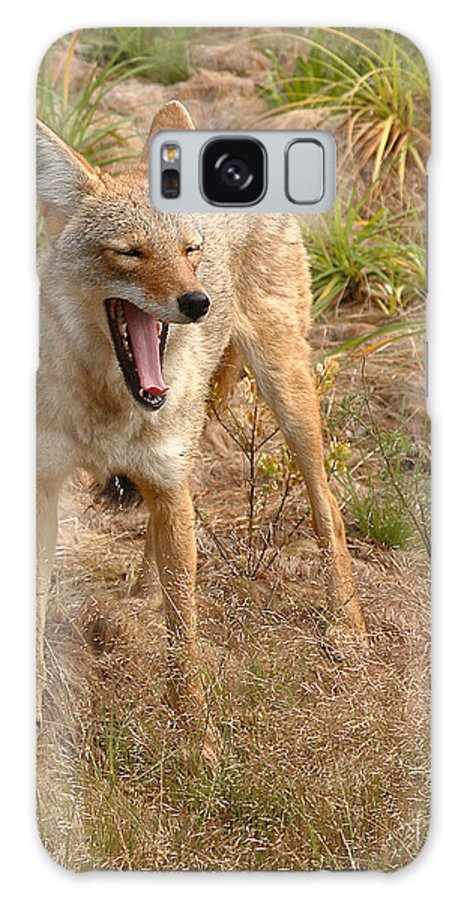 Coyote Galaxy S8 Case featuring the photograph Coyote Caught In A Yawn by Max Allen