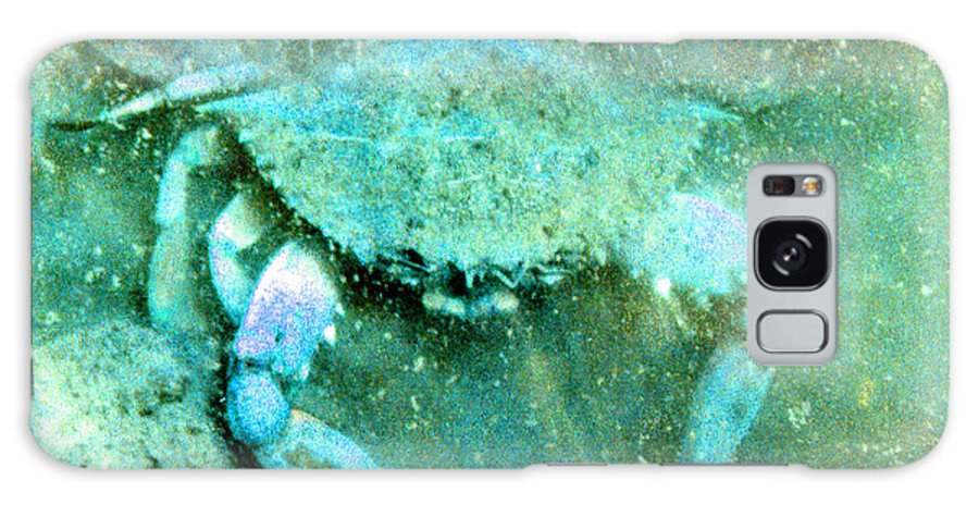 Marine Galaxy S8 Case featuring the photograph Crab With The Blues by Wayne Potrafka