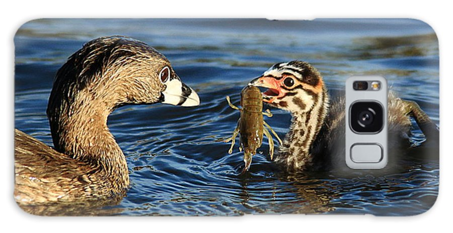 Pied-billed Grebe Galaxy S8 Case featuring the photograph Crayfish - Again? by Matt Blankenship