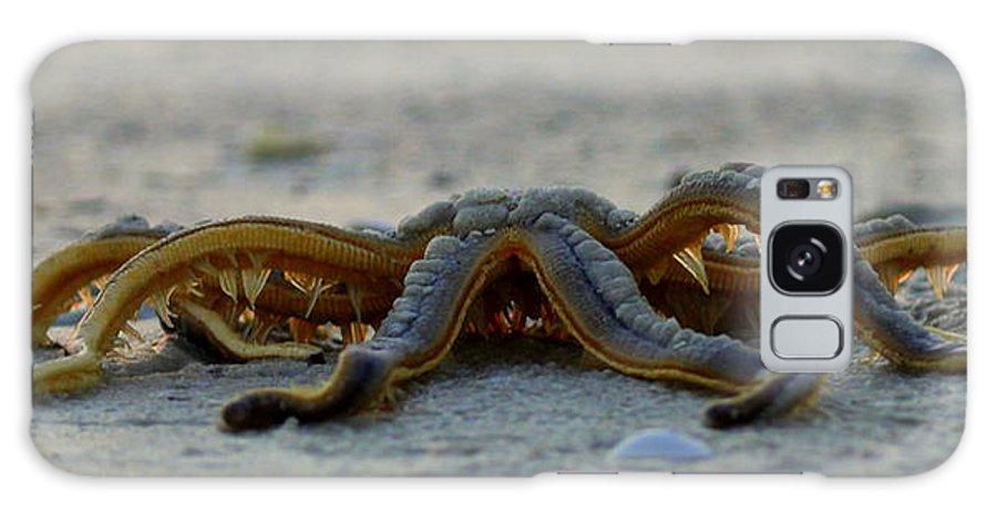 Paradise Galaxy S8 Case featuring the photograph Creepy Crawley by Sean Allen