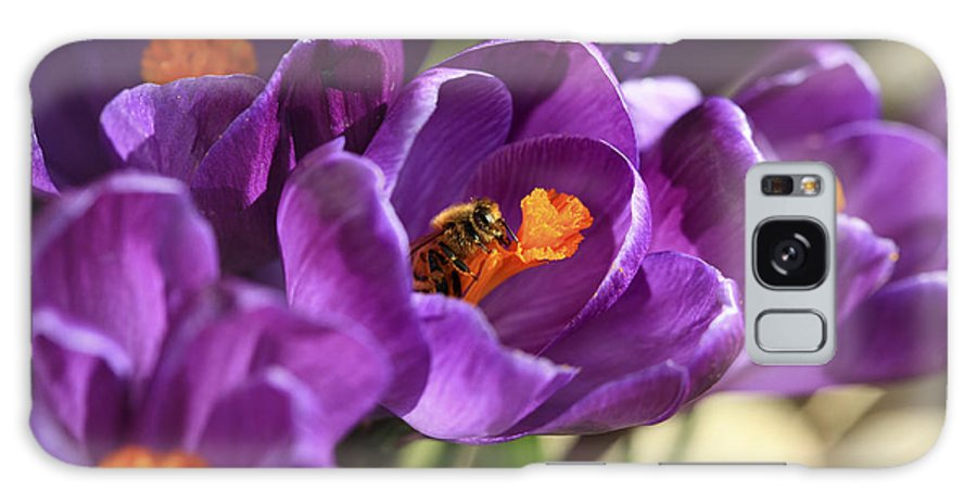 Bee Galaxy S8 Case featuring the photograph Crocus And Bee by Marilyn Hunt