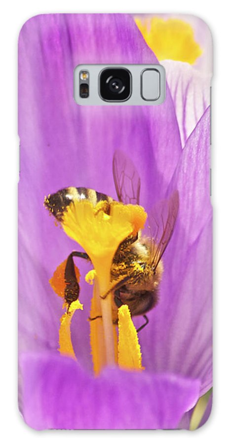 Crocus Galaxy S8 Case featuring the photograph Crocus And The Bee by Michael Peychich