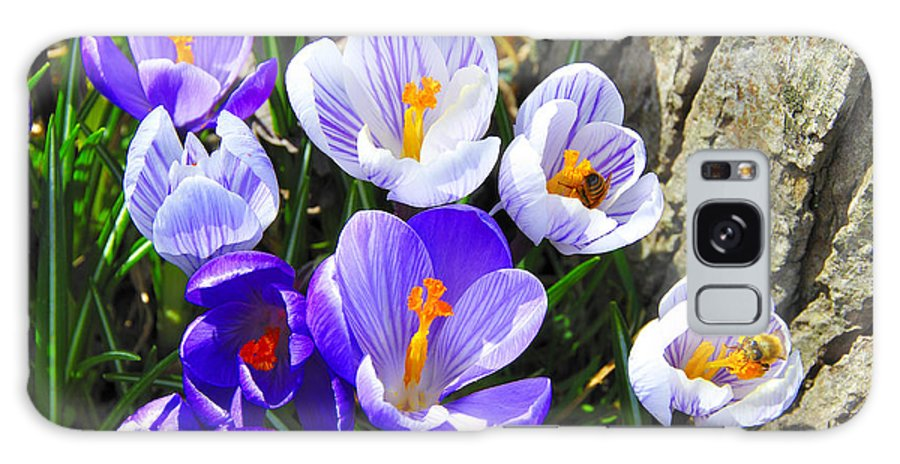 Crocus Galaxy S8 Case featuring the photograph Crocus Tommasinianus by Thomas R Fletcher