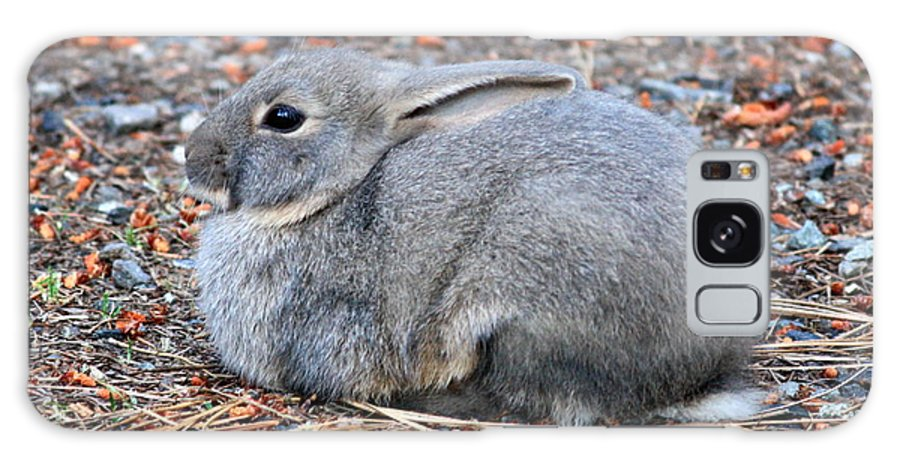 Rabbit Galaxy S8 Case featuring the photograph Cuddly Campground Bunny by Carol Groenen