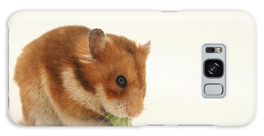 Hamster Galaxy S8 Case featuring the photograph Curious Hamster by Yedidya yos mizrachi