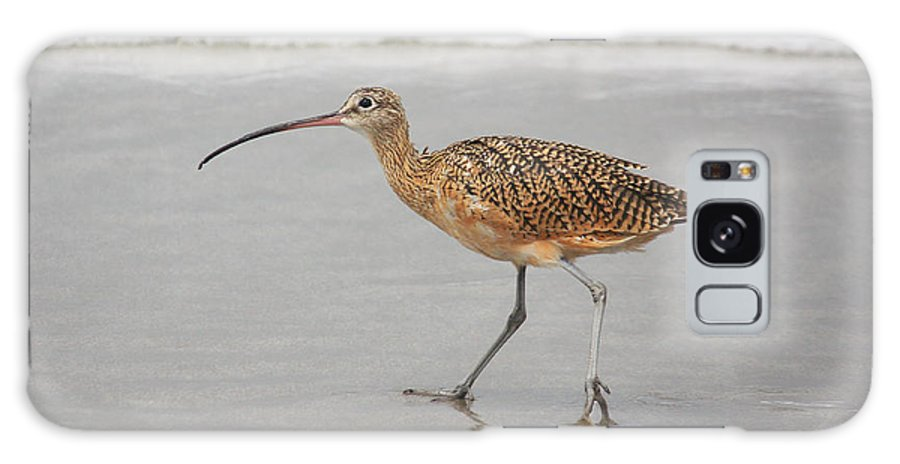 Bird Galaxy S8 Case featuring the photograph Curlew In The Surf by Alison Salome