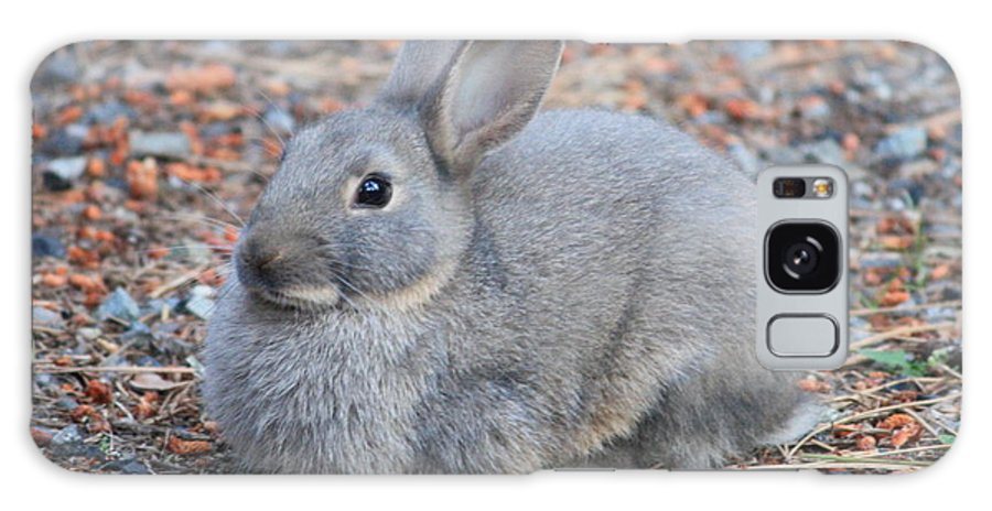 Rabbit Galaxy S8 Case featuring the photograph Cute Campground Rabbit by Carol Groenen