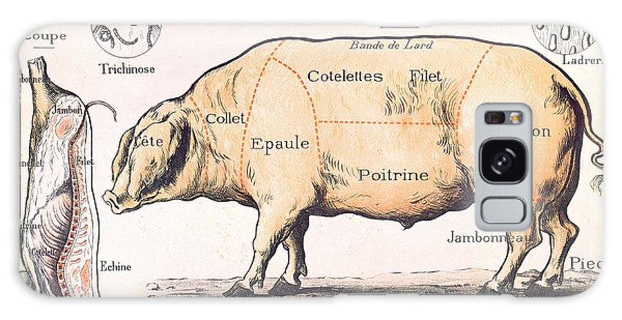 Eating;farm Animals; Cross Section; Loin; Rump; Flank; Butcher; Joint; Pig; Pigs; Shoulder; Ham; Belly; Shoulder; Diagram; Slaughter; Farming; Food Preparation; Domestic Science; Nutrition;teaching;education;home Economics; Farming; Breed;butchering Galaxy S8 Case featuring the drawing Cuts Of Pork by French School