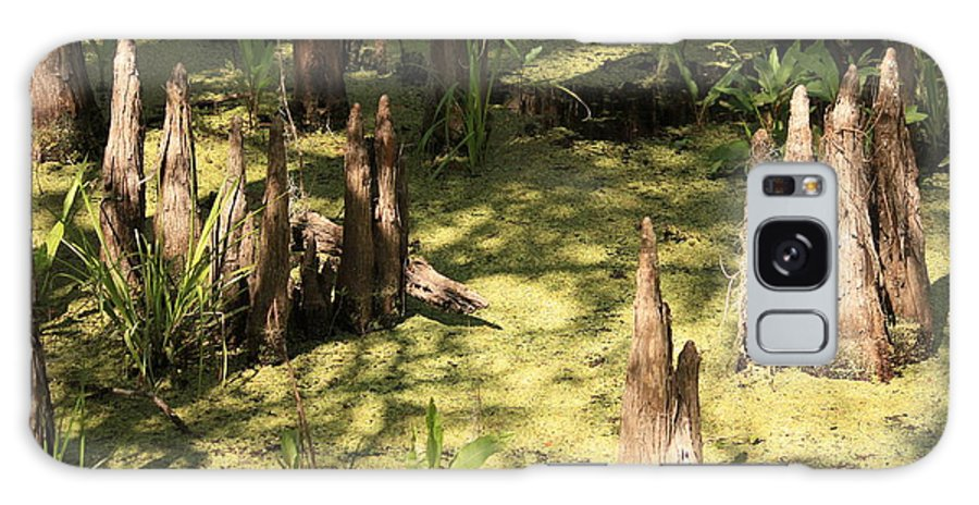 Swamps Galaxy S8 Case featuring the photograph Cypress Knees In Green Swamp by Carol Groenen
